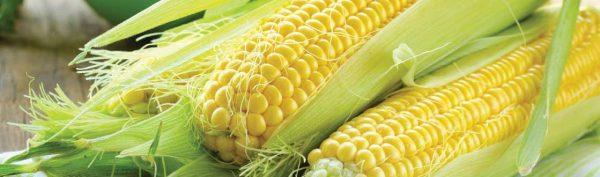 Corn (CSA Shares)