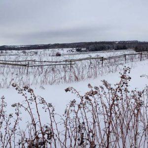 Winter farm fields