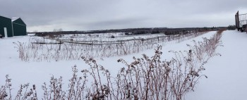 Winter farm fields